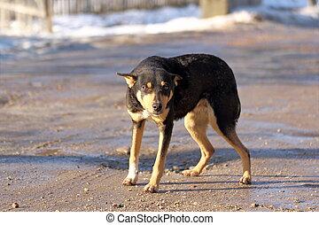 dog on a rural road
