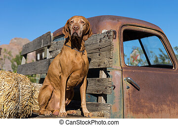 dog on a trucks flatbed