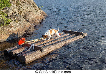dog on a wooden raft