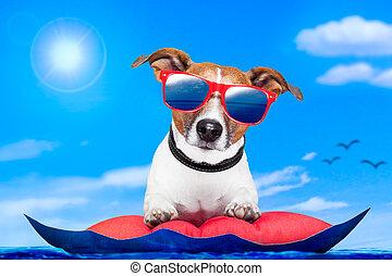 dog on an air matress