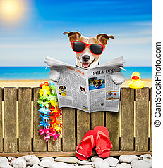 jack russel dog resting and relaxing on a wall or fence at the beach ocean shore, on summer vacation holidays, reading a magazine or newspaper