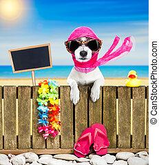dog on beach on summer vacation holidays - terrier dog...