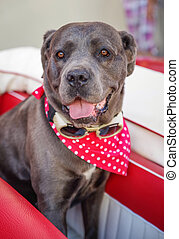 Dog on car seat