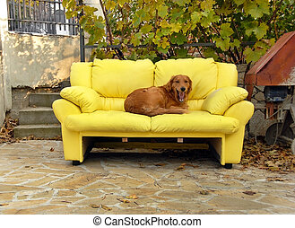 dog lying on yellow couch outdoor in yard