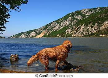 Dog on Danube riverbank