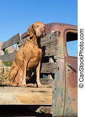 dog on flatbed truck