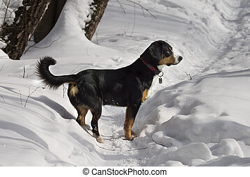 Dog on footpath in the Winter Forest