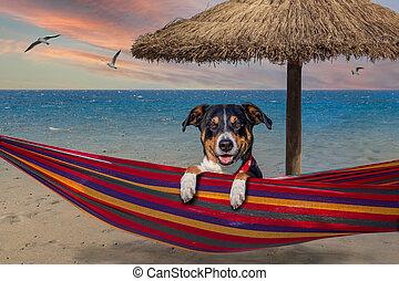 dog on hammock in summer, dog at the beach at the beach