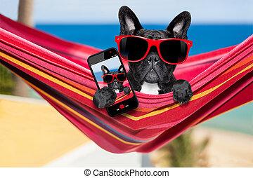 dog on hammock in summer