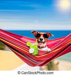 dog on hammock in summer - jack russell dog relaxing on a ...