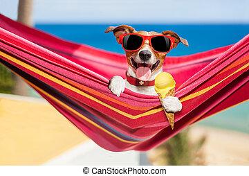 dog on hammock in summer with ice cream
