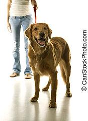 Dog on leash with girl.