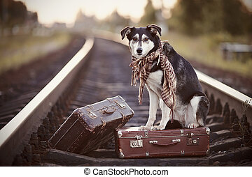 Dog on rails with suitcases. The dog looks for the house....