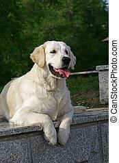 Dog on stone