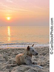 Dog on the beach at sunrise