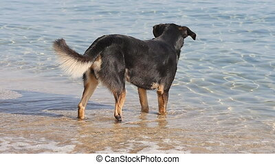 Dog on the beach in slow motion - Dog on the beach. Travel...