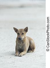 dog on the beach
