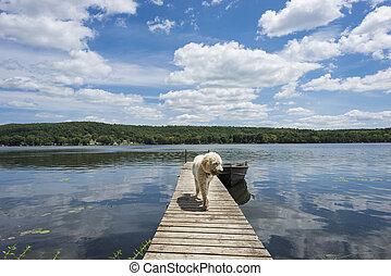 Dog on the Cottage Dock