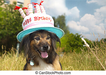 dog on the meadow have birthday