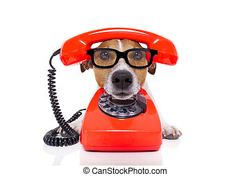 dog on the phone - jack russell dog with glasses as ...