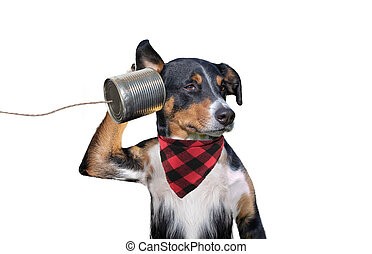 dog on the phone (Tin can)
