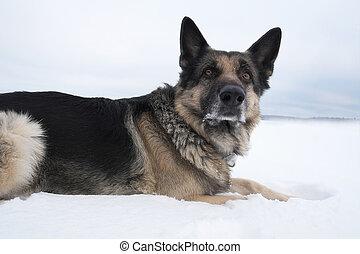 Dog on the Snow