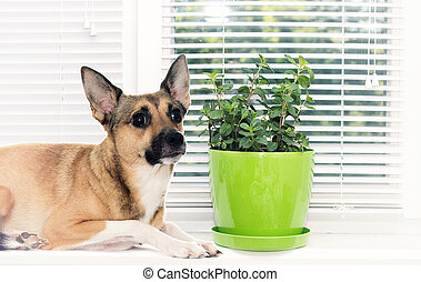 Dog on the window sill