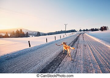 Dog on the winter road