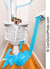 dog on toilet seat and newspaper - jack russell terrier,...