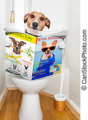 dog on toilet seat - jack russell terrier, sitting on a ...