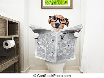 dog on toilet seat reading newspaper - jack russell terrier,...