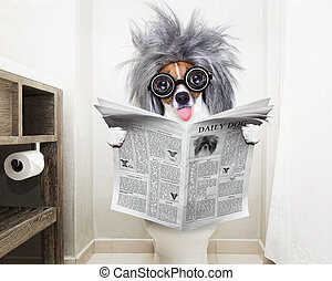 dog on toilet seat reading newspaper - smart dumb jack ...