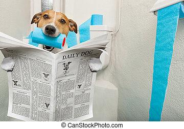 dog on toilet seat