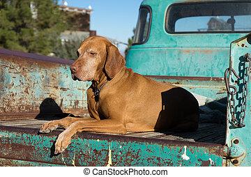 dog on trucks flatbed