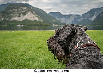 dog on walker at austrian lake hallstatt