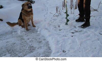Dog on winter fishing 4.