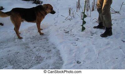 Dog on winter fishing
