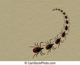 Dog or cat tick invasion - aka Black legged deer tick - On...