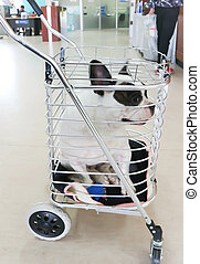 dog in the trolley