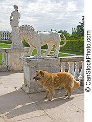 Dog or lion