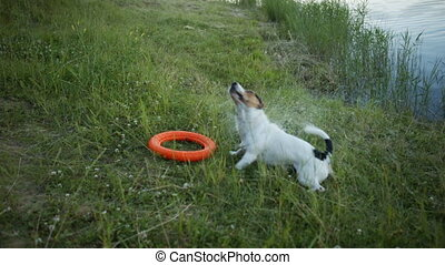 Dog out of the water and shakes.