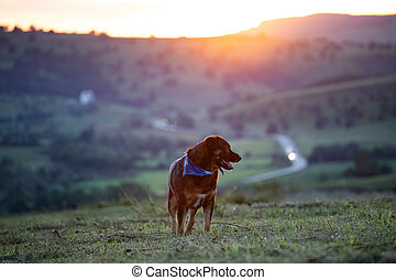 Dog outdoor in magic sunset.