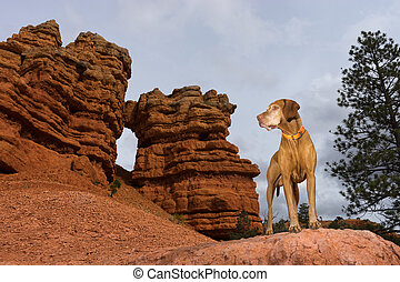 dog outdoors on red cliff