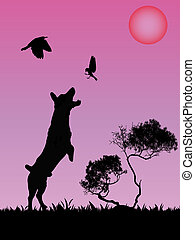 Dog palying with birds