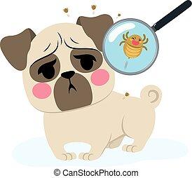 Dog Parasite Infection