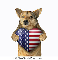Dog patriot with an american heart