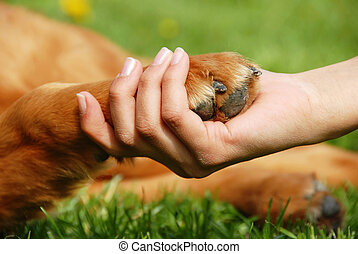 Dog paw and hand shaking - yellow dog paw and human hand...
