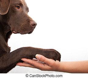 Dog paw and human hand doing a handshake - Dog paw and human...