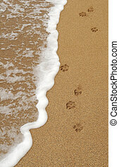 Dog Paw Footprints in the Sand - Four isolated dog paw...