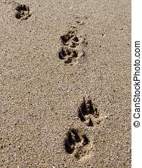 Dog Paw-prints